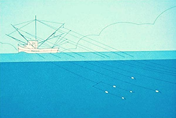 sustainable fishing : troller